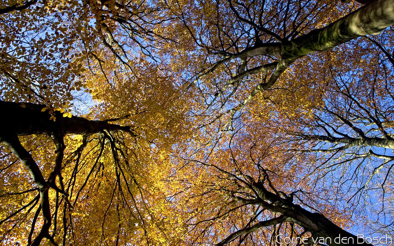 herfst breedbeeld