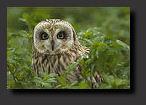 Prachtige vogelfotografie van Rein Hofman